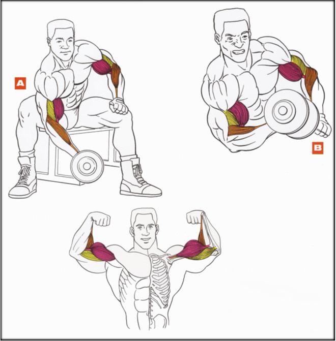 Упражнения с гантелями для рук и спины в домашних условиях