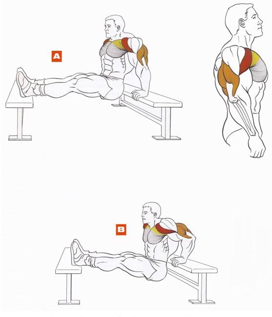 Тренировка чтобы накачать грудные мышцы в домашних условиях