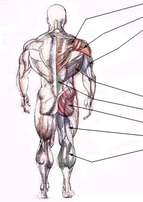 Кисти мышцы живота пресс и косые мышцы